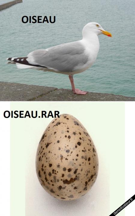 oiseau, oiseau.rar