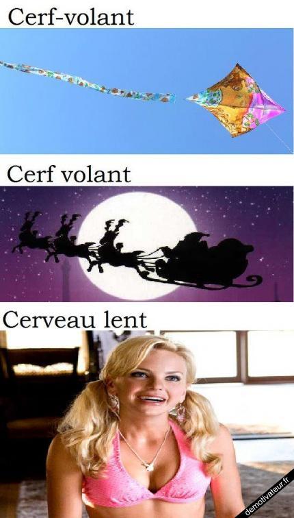 Cerf-volant...