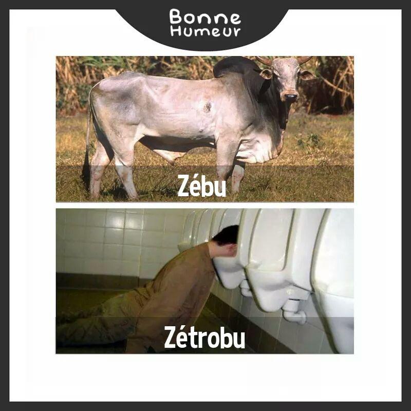 zebu-zetrobu